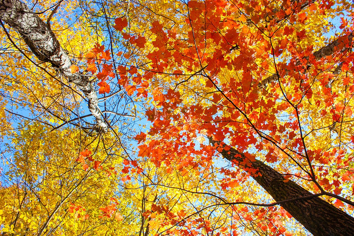 Resplendent autumn leaves on a branch with hues of orange, yellow, and red, and a blue sky peaking between the leaves.